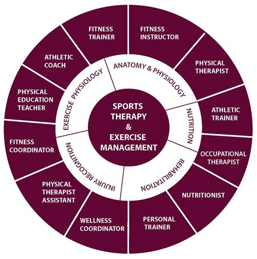 Sports Therapy & Exercise Management Career Wheel