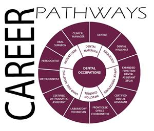 Career Pathway Wheel for Dental Occupations